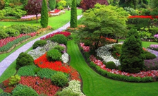 100种常用园林植物,图文并茂